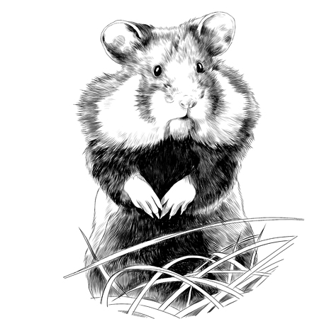 hamster with fat cheeks standing in the grass sketch vector graphics monochrome drawing