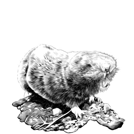 Mole sketch graphics of a black-and-white drawing
