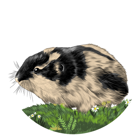 Lemming sketch vector graphics color picture