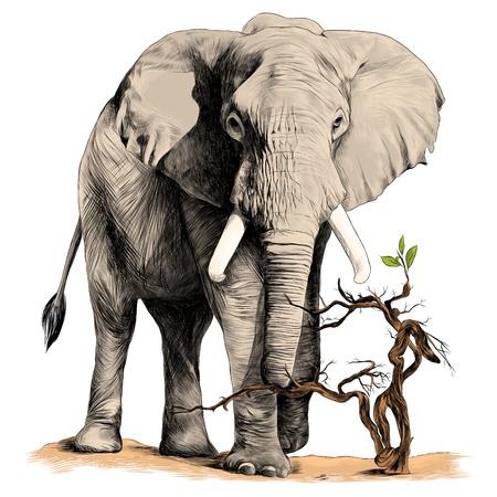 olifant wandelen in de woestijn tak schets vector grafische kleurenafbeelding