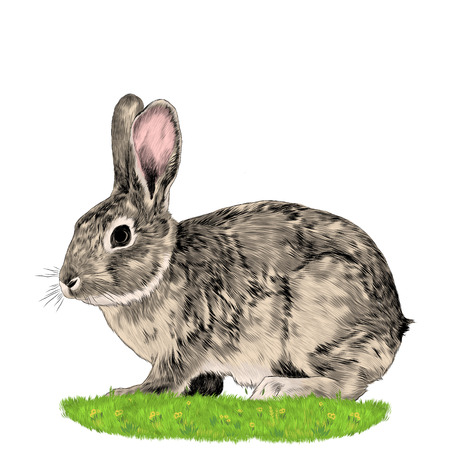 Bunny sitting on the grass sketch vector graphics color picture