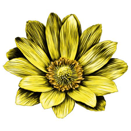 ドンニスの花の枝は花びらを芽生ます。スケッチベクトル。