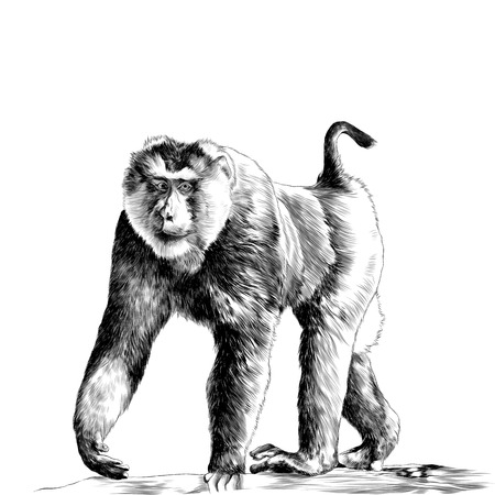 A gorilla stands on the stone with leaves sketch graphics of a black and white drawing