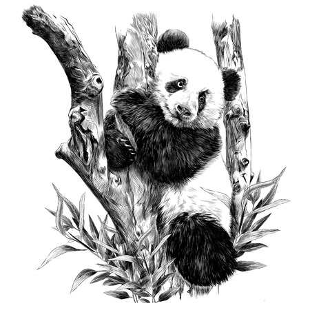 Panda rests on a branch hugging the sheets of sketch vector graphics monochrome black-and-white picture Иллюстрация