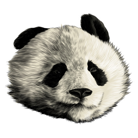 Panda head emotionless sketch graphics colored picture