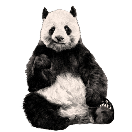 Panda sitting smiling figure in full-length sketch vector graphics color