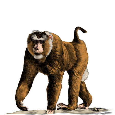 Monkey goes on the rocks on four legs. Sketch vector. Banque d'images - 95826340