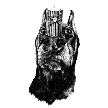Doberman with candles on the nose. Sketch vector.
