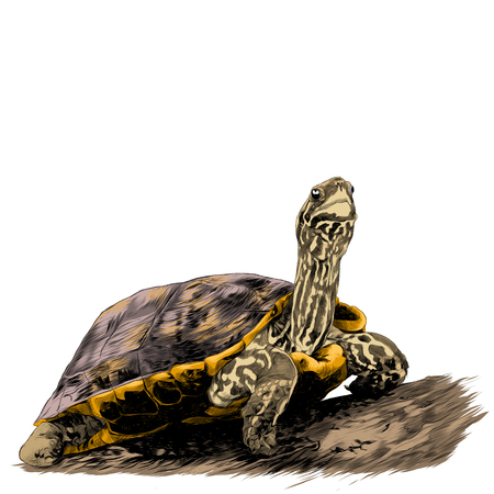 A turtle sits on a log sketch graphics colored picture Vectores