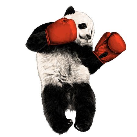 Panda boxer sketch vector graphics color picture
