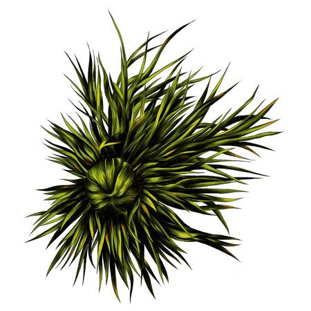 Adonis flower branch sprout petals. Sketch vector. Illustration
