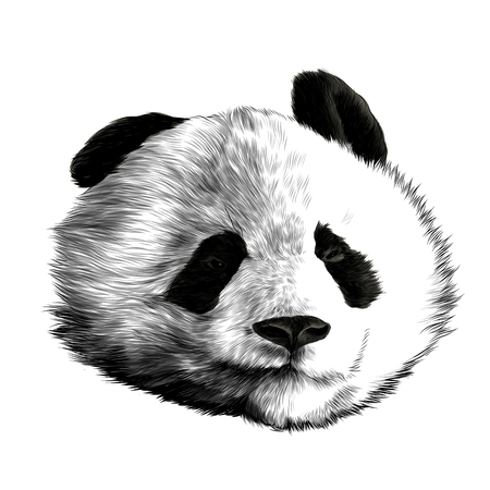 Head panda different emotions with glasses lovers sketch vector graphics monochrome black-and-white drawing