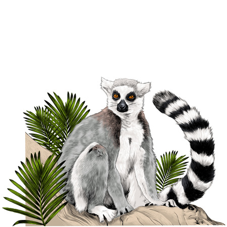 Lemur sitting on a tree trunk near the branches of a palm tree sketch vector graphics color picture