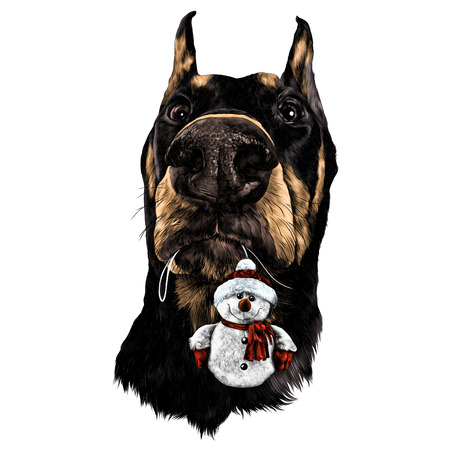 Doberman head with a plush snowman in the teeth sketch graphics colored drawing