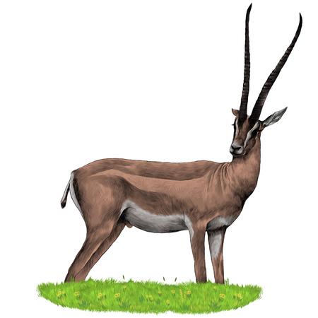 Een Gazelle staat in het gras schets vector grafische kleurenafbeelding Stock Illustratie