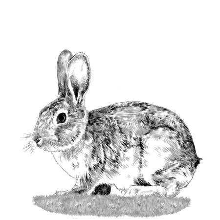 Bunny sitting on the grass sketch vector graphics monochrome drawing Illustration