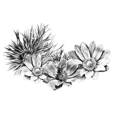 Adonis flower branch sprout petals sketch graphics of a black-and-white drawing