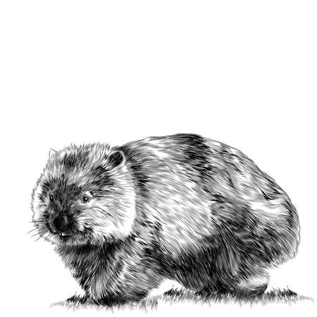 草スケッチベクターグラフィックモノクロ図面に座っているふわふわウォンバット  イラスト・ベクター素材