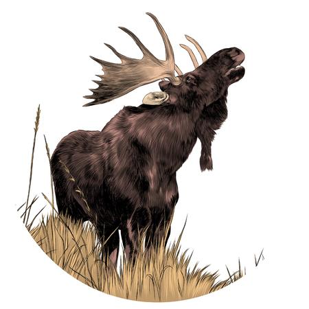 Een eland die zich op droog gras bevindt terwijl omhoog het kijken van schetsgrafiek gekleurd beeld