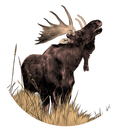 An elk standing on dry grass while looking up sketch graphics colored picture Illustration