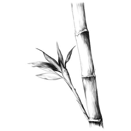 葉枝ステム竹模様花テクスチャフレームシームレススケッチベクトルグラフィックスモノクロ白黒描画