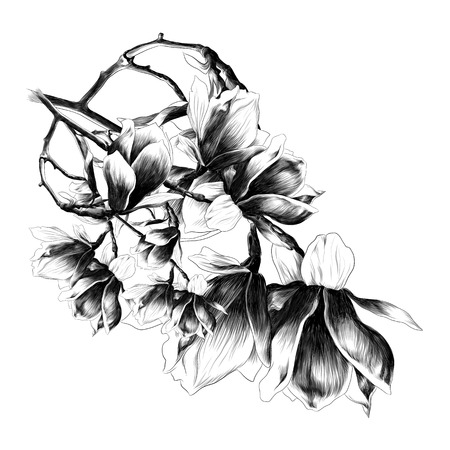 a lush bouquet of flowers Magnolia sketch vector graphics monochrome drawing