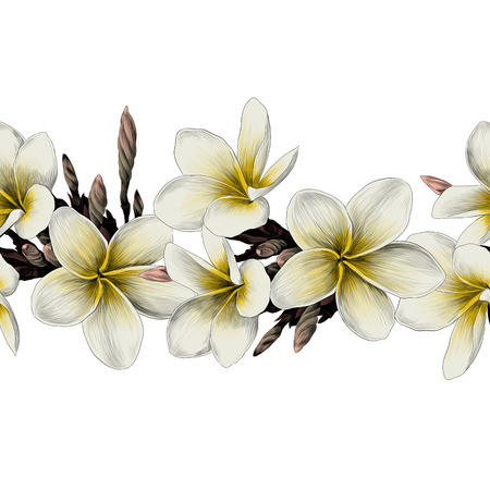 Magnolia flower strip sketch graphics colored picture