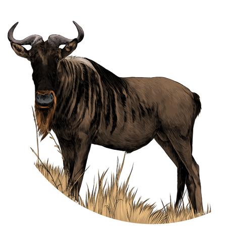 雄牛は乾燥した草の中に立っている。スケッチベクトル。