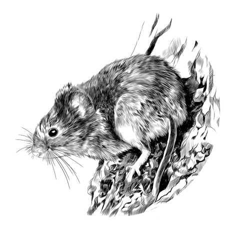 Field mouse hanging on a tree trunk, sketch vector graphics monochrome drawing