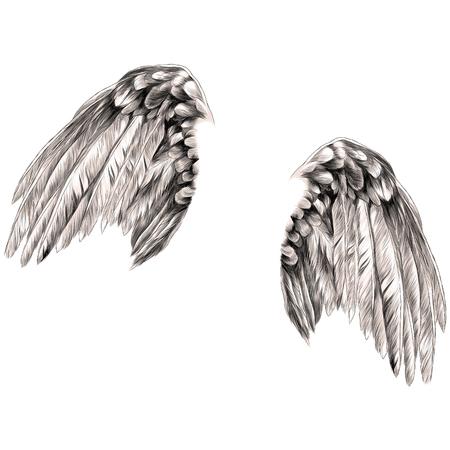 angel wings sketch vector graphics color picture Archivio Fotografico - 95810270