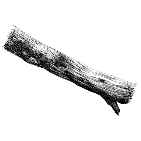 Branch of the beam tree sketch vector graphics monochrome black-and-white drawing