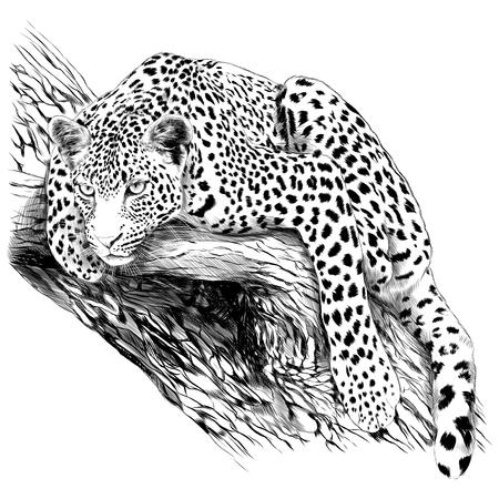 예 표범은 나무 스케치 벡터 그래픽 흑백 드로잉의 줄기입니다