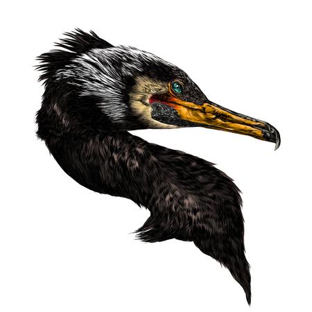 Vogel aalscholver hoofd schets vector grafische kleurenafbeelding