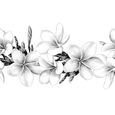 seamless strip of Magnolia flower sketch vector graphics monochrome drawing Ilustrace