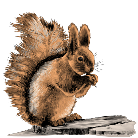 squirrel sitting on a rock and gnawing a nut sketch vector graphics color picture Banque d'images - 95649963