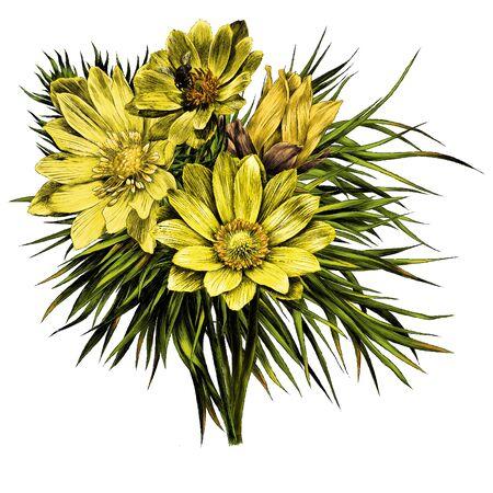 Adonis flower branch sprout petals a bright Sunny bouquet set wreath sketch vector graphics color picture