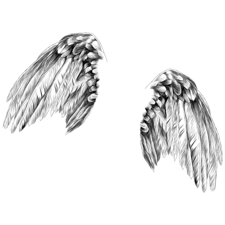 angel wings sketch vector graphics monochrome drawing