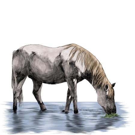 het paard staat in de vijver en eet gras schets vectorafbeeldingen kleurenafbeelding Stock Illustratie