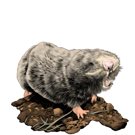 Chubby mole on a ground sketch graphics colored picture