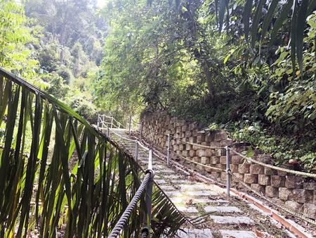 石で舗装された道は、ヤシの木でジャングルを通って通り抜ける