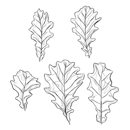 sketchy black and white oak leaf pattern in outline set of five pieces