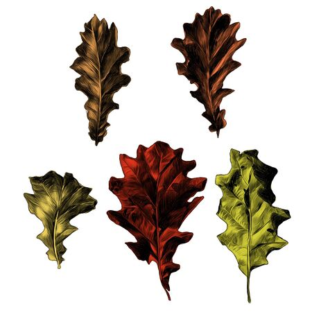 a set of oak leaves five elements of the sketch vector graphics color picture