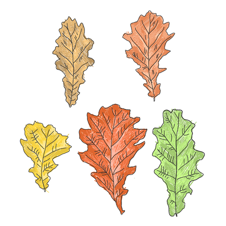 childrens colored drawing of oak leaves, a set of five pieces