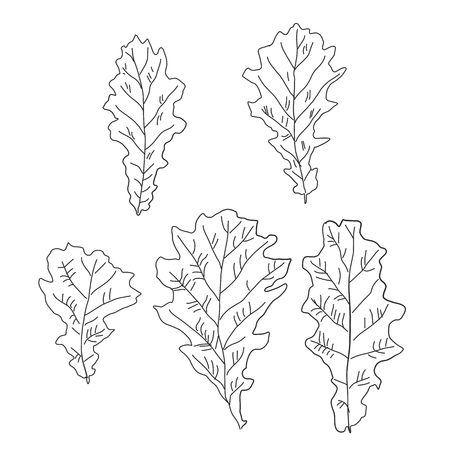 childrens black and white drawing of oak leaves in a contour set of five pieces Banco de Imagens