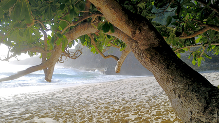 Kelingking beach on the island of Penida in Indonesia, the tree in the foreground on the background of sandy beach