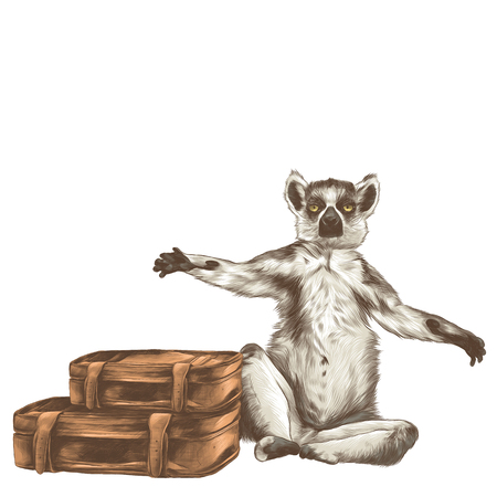 A lemur sitting with raised paws with two retro suitcases, vector sketch graphics colored drawing