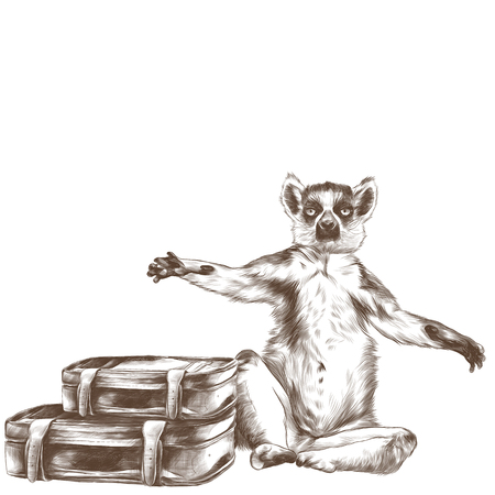 A lemur sitting with raised paws with two retro suitcases, sketch vector graphic monochrome pattern Ilustrace