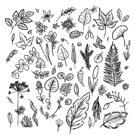 set of different leaves and branches drawn in the style of childrens drawing fast by hand, sketch vector graphics monochrome drawing 스톡 콘텐츠