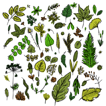 set of different leaves and branches drawn in the style of childrens drawing fast by hand, sketch vector graphics colored drawing