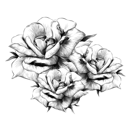 bouquet of rose flower buds on white background, sketch vector graphics monochrome illustration Vektorgrafik